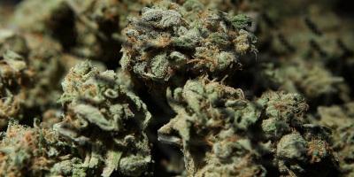 Как выглядит марихуана конопля каннабис