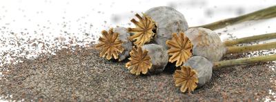 Симптомы употребления маковой семечки